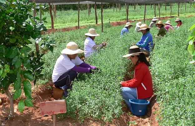 agricultura-familiar-casa-tamasite-canarias