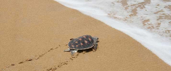 suelta-tortugas-canarias