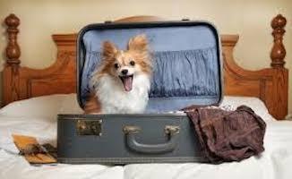 mascotas-alojamientos